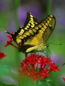 Butterfly zoo_4_bg_050403